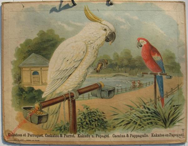774 - Kakatoes et Perroquet, Cockatoo & Parrot, Kakadu u. Papagei, Cacatua & Pappagallo, Kakatoe en Papegaai